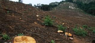 Dramatische Abholzung: Warum verschwinden Afrikas Wälder?