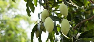 Das ist Kolumbiens erstes Bio-Fruchtsaftgetränk