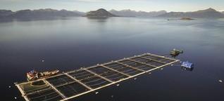 Lachszucht in Chile - Aquakultur mit Nebenwirkungen