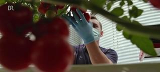 Gemüsebauer : Saisonarbeiter ohne Abzocke
