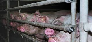 Niederlande - Bauern unter Klima-Druck