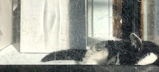DLF Kultur Echtzeit: Straßenkatzen in NYC