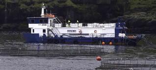 Färöer: Von Lachsen lernen