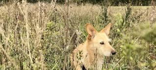 Haustiere in der Pandemie: Ein Corona-Hund, na und?