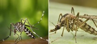 Gefährlichen Mücken auf der Spur