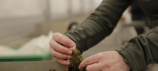 Wie Biokrusten dem Wald helfen können