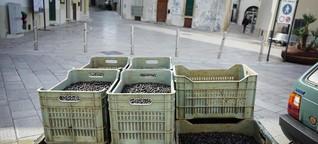 Die Olivenkrise, Teil 3: «Wenn nicht drin ist, was drauf steht»