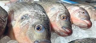 Mit Fischen will dieses Berliner Unternehmen die Ernährung revolutionieren