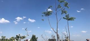 Vogelgezwitscher und Ekstase in Delhi