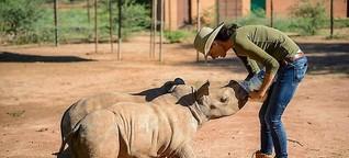 Kampf gegen Wilderei: Kann der Handel mit Nashorn Tiere schützen?