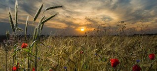 Wie Start-ups den Getreide-Handel in Brandenburg digitalisieren