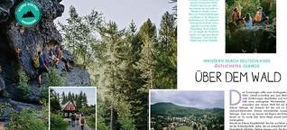 Über dem Wald