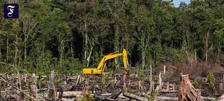 Rekord-Kahlschlag im Regenwald: Mit fünf Alltagstricks gegen die Abholzung
