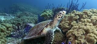 Warum wir die Ozeane retten müssen
