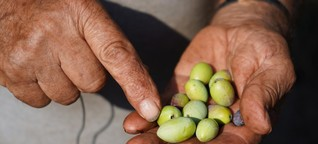 Olivenbauern: Einst hatte er 2.000 Olivenbäume. 1.500 sind tot