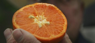 Gewerkschaften über Orangensaft: Enthält Vitamin C und Zwangsarbeit