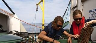 Was Ökologen forschen: Das Rätsel um die Europäische Auster