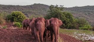 Erhalt der Biodiversität - Ein Drittel der Erde soll unter Naturschutz gestellt werden
